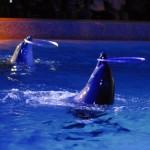 Дельфины играют с кольцами