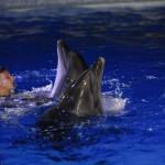 Дельфины танцуют