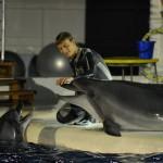 Дельфин с дресировщиком